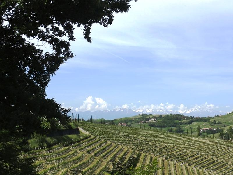 Wine Writing